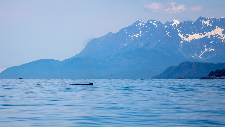 Juneau Alaska - 42.jpg