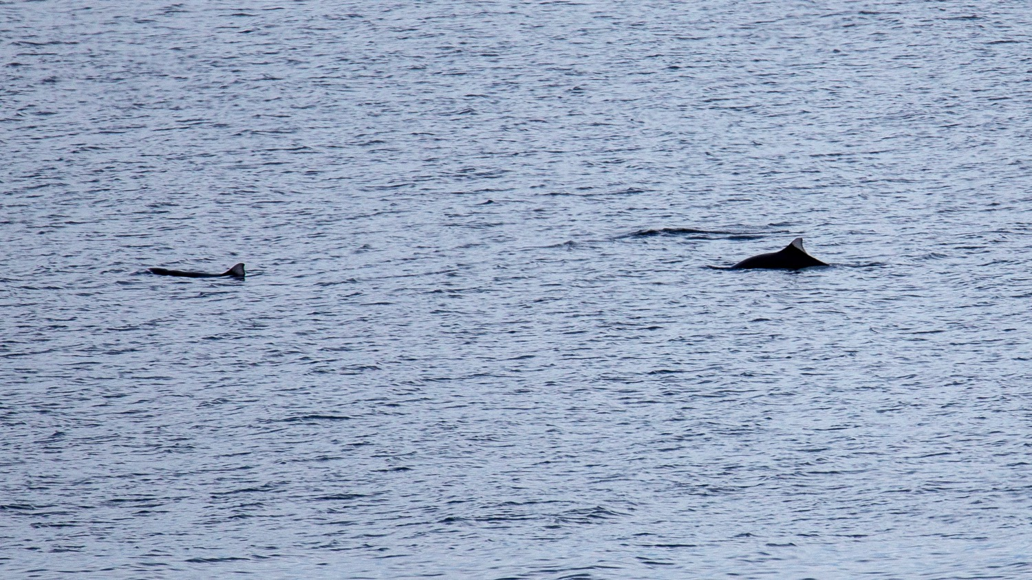 We saw porpoises quite a few times throughout the day.