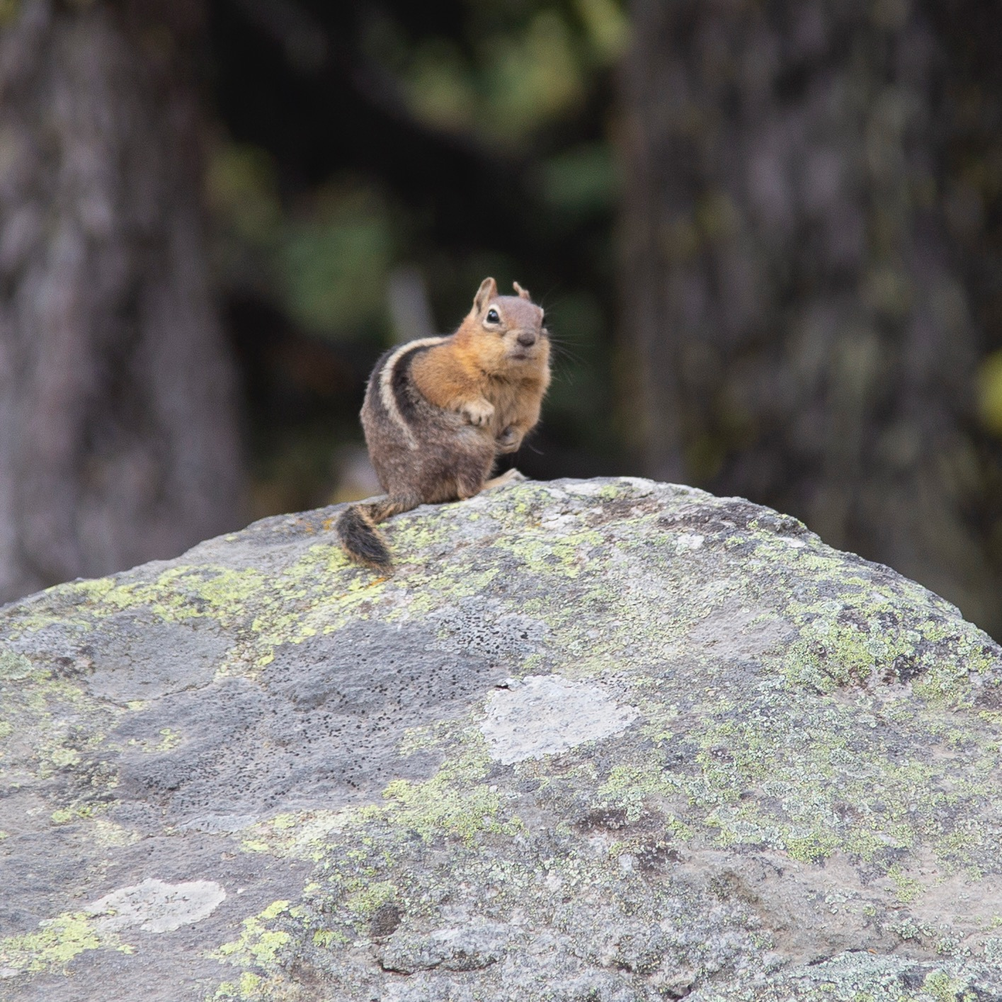 This little guy was at the trailhead to see us off.