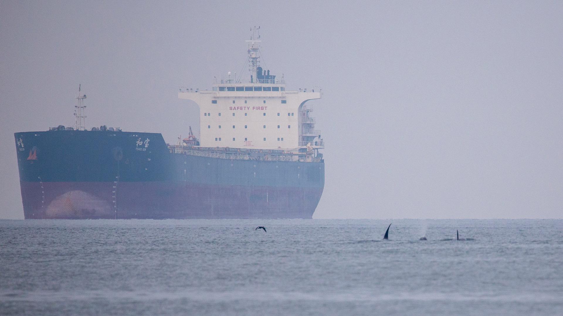 Whale Watching - 2.jpg
