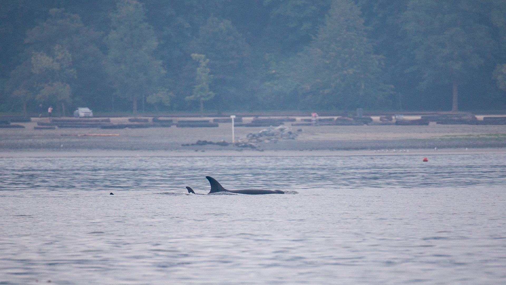 Whale Watching - 3.jpg