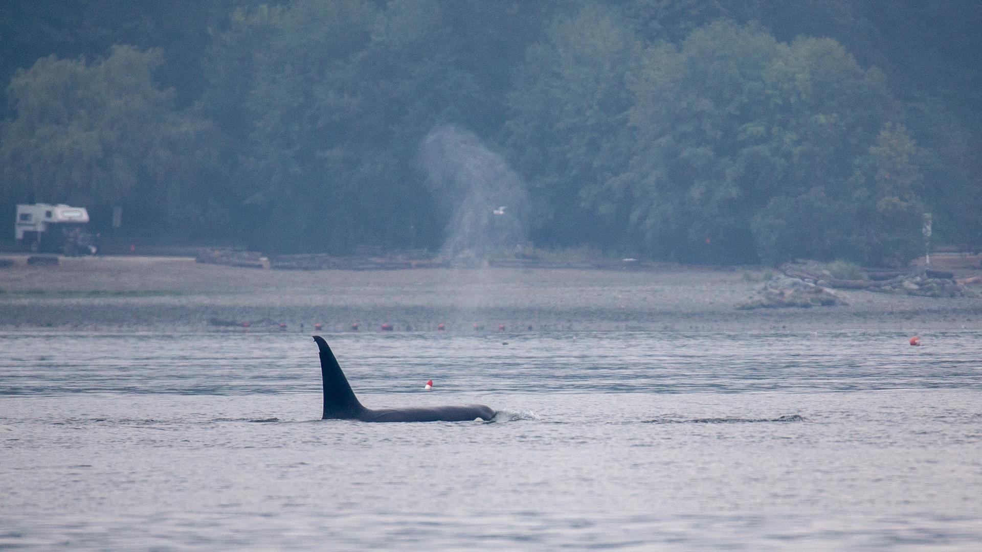 Whale Watching - 6.jpg