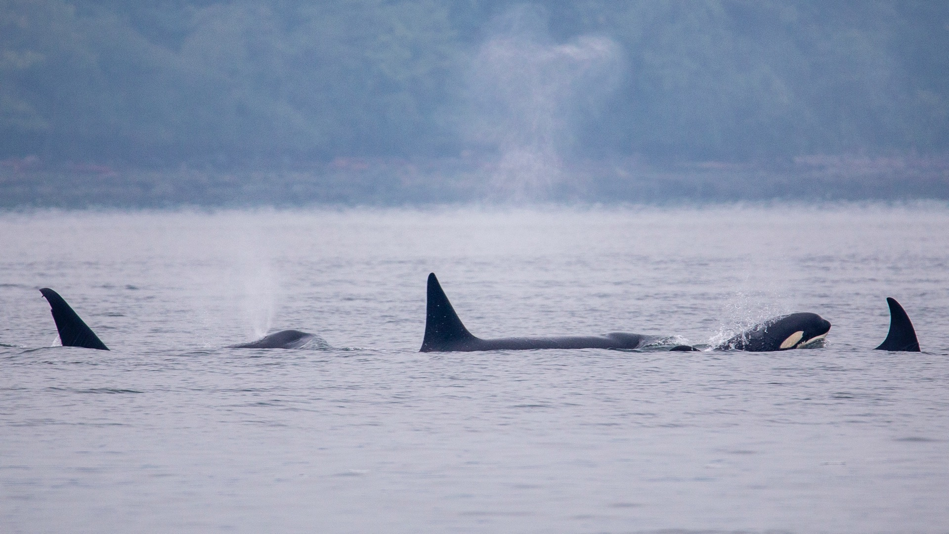 Whale Watching - 10.jpg