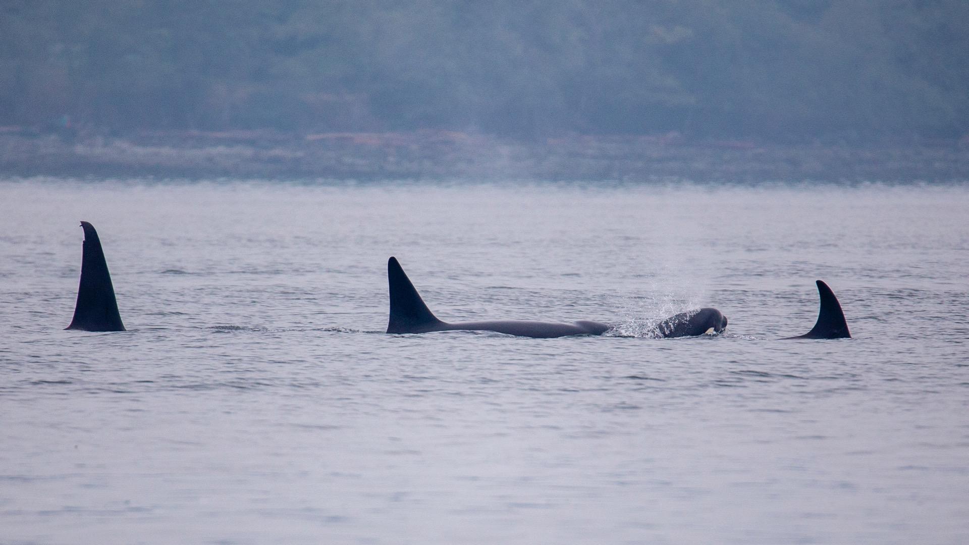 Whale Watching - 13.jpg