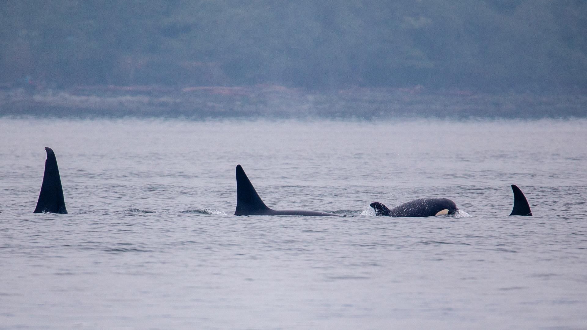 Whale Watching - 14.jpg