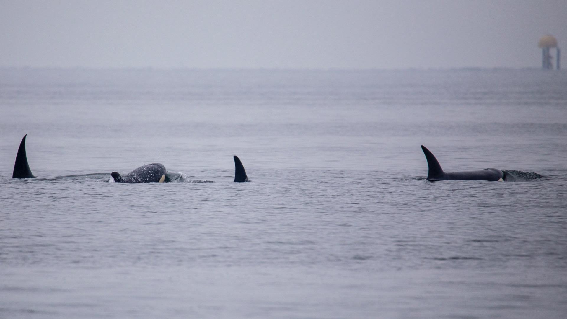Whale Watching - 17.jpg