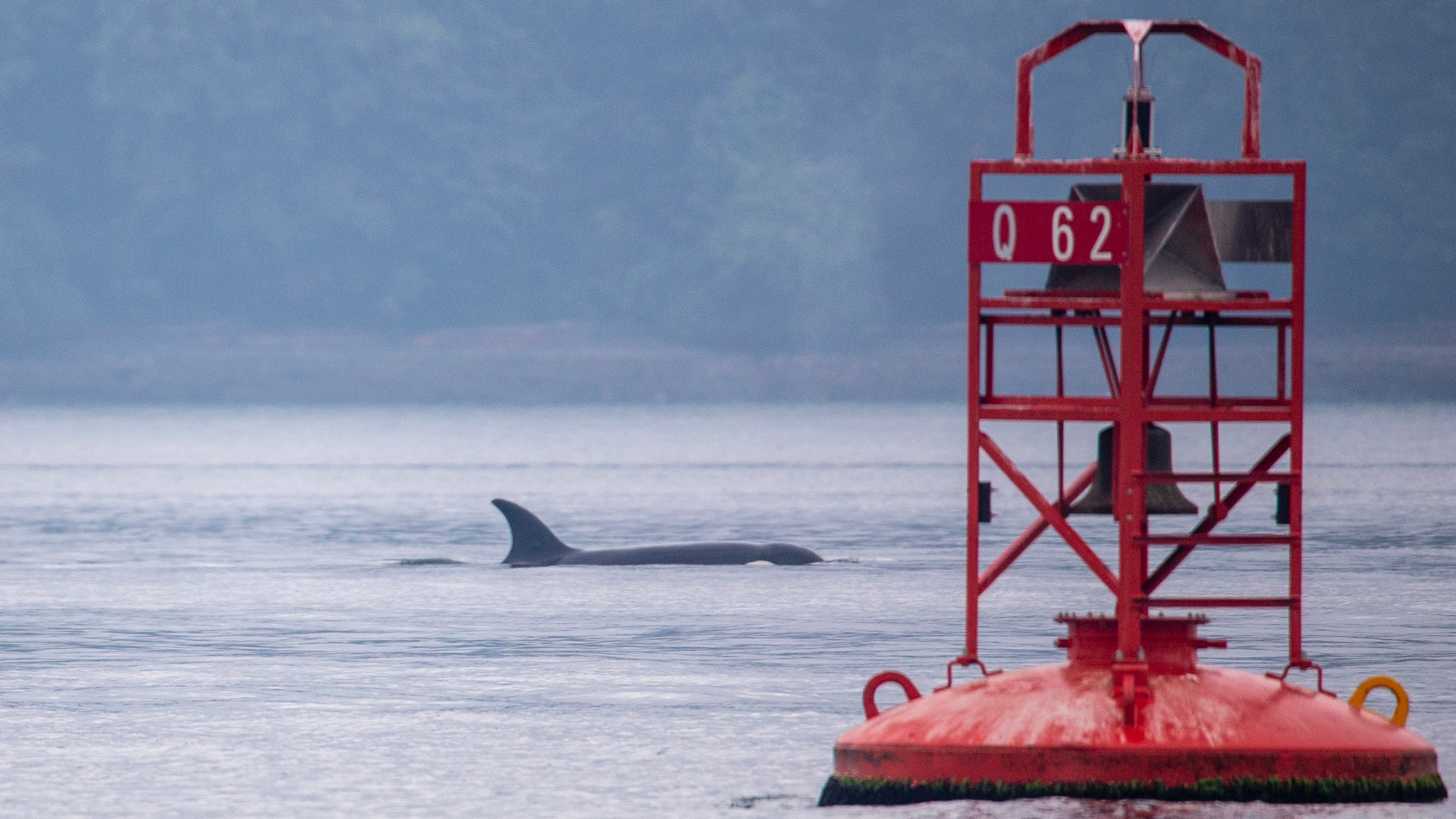 Whale Watching - 19.jpg