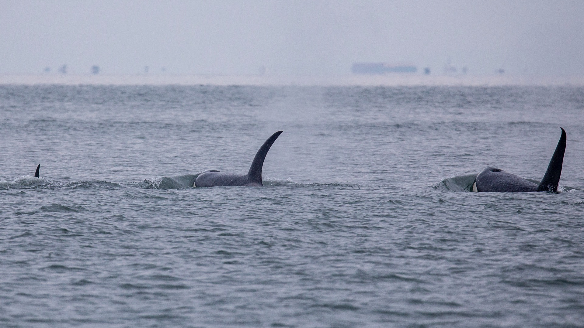 Whale Watching - 23.jpg