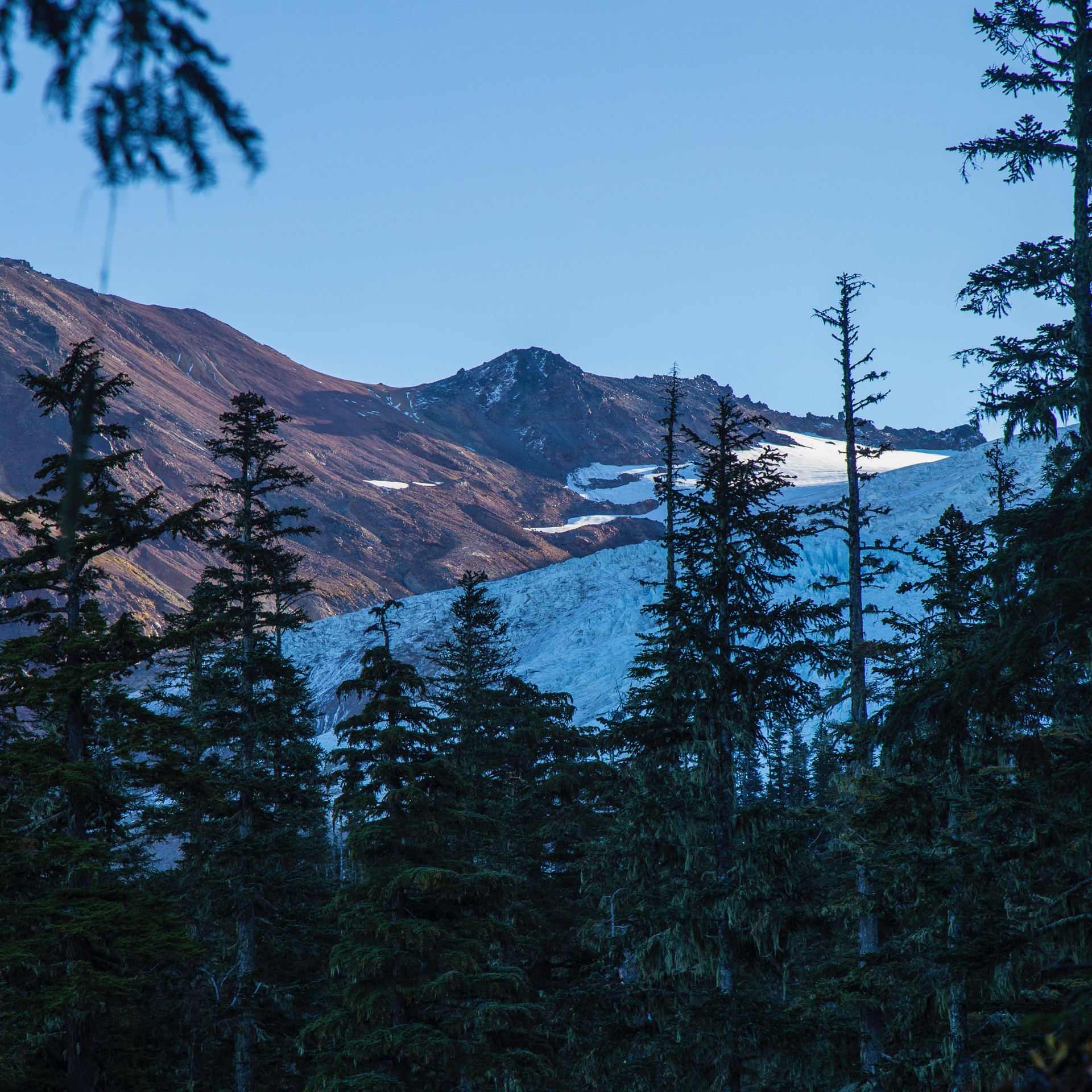 It didn't take all that long for us to catch a glimpse of the glacier through the trees.
