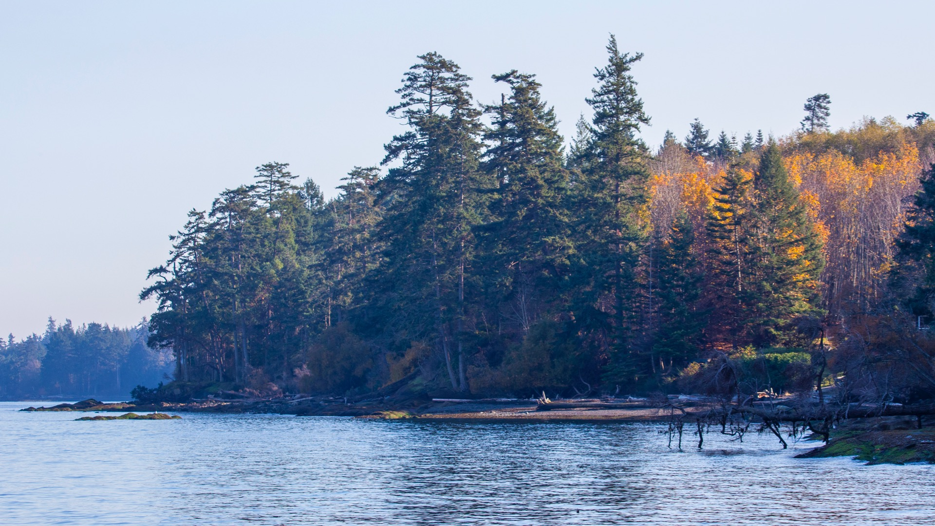 There was still some fall colour on the leaves down the beach.