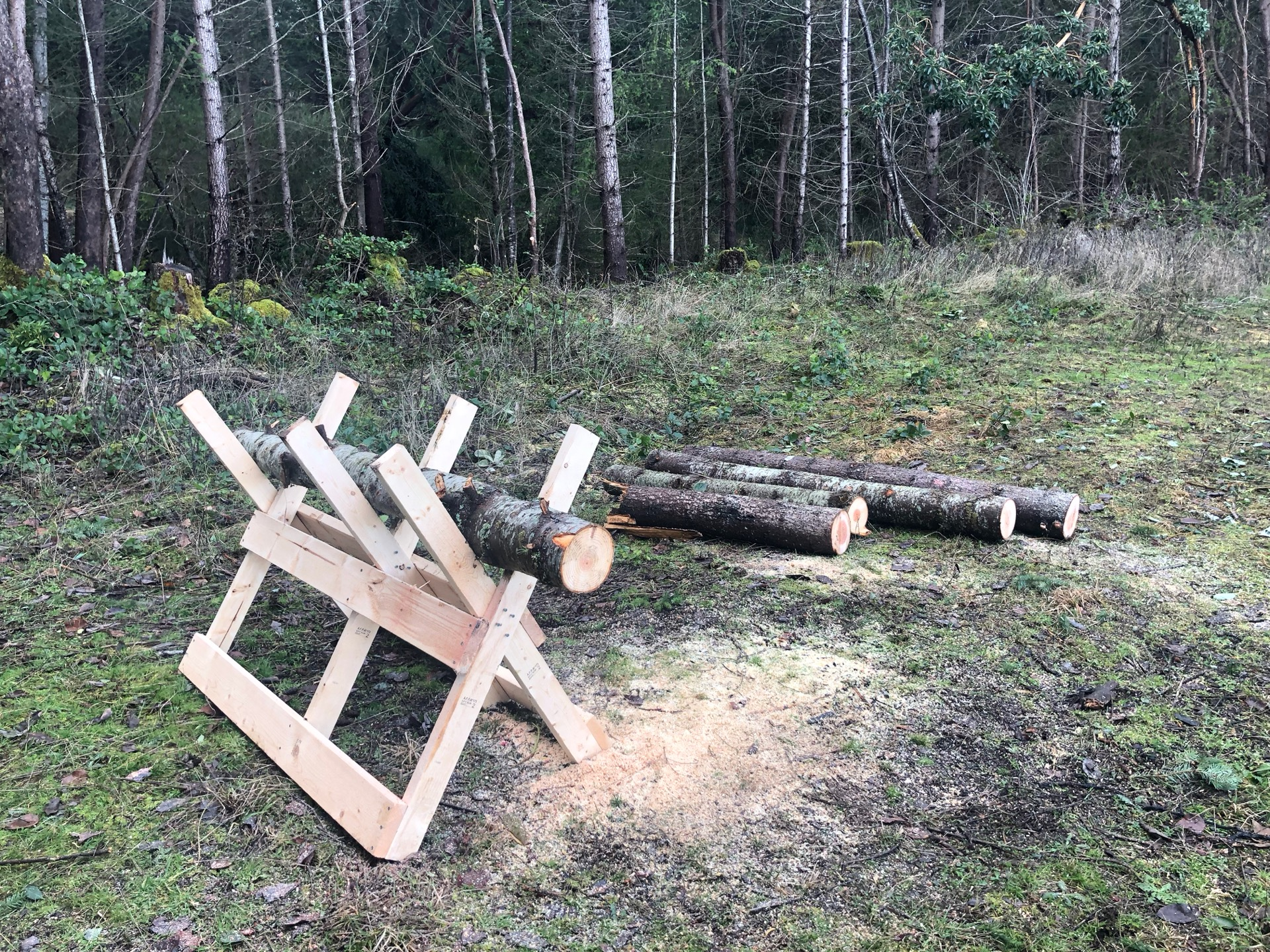 All that was left were a few big logs that needed to be cut up. They were a bit too heavy for me to handle solo.