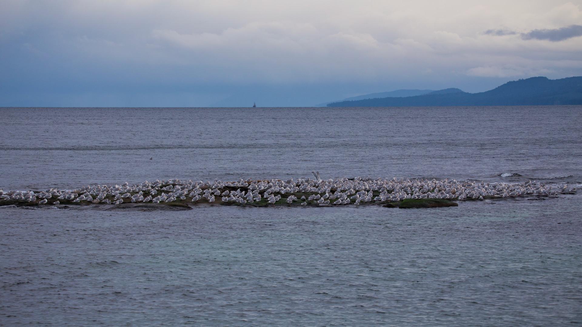I know where al the seagulls go…