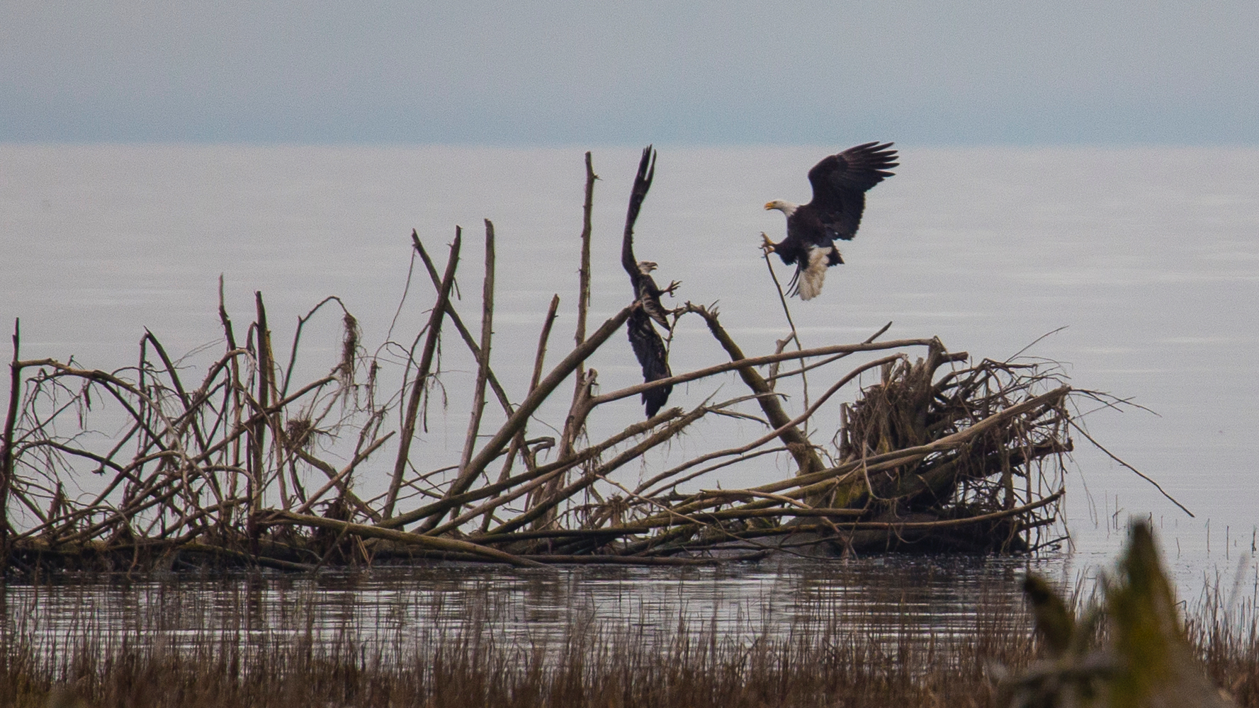 The pair of eagles seemed to be fighting over territory… or maybe mating - not really sure but it was cool!