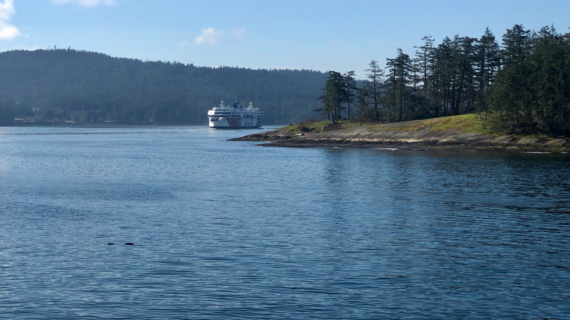 It was a gorgeous day, as we watched a different ferry heading into active pass, from the Salish Orca.