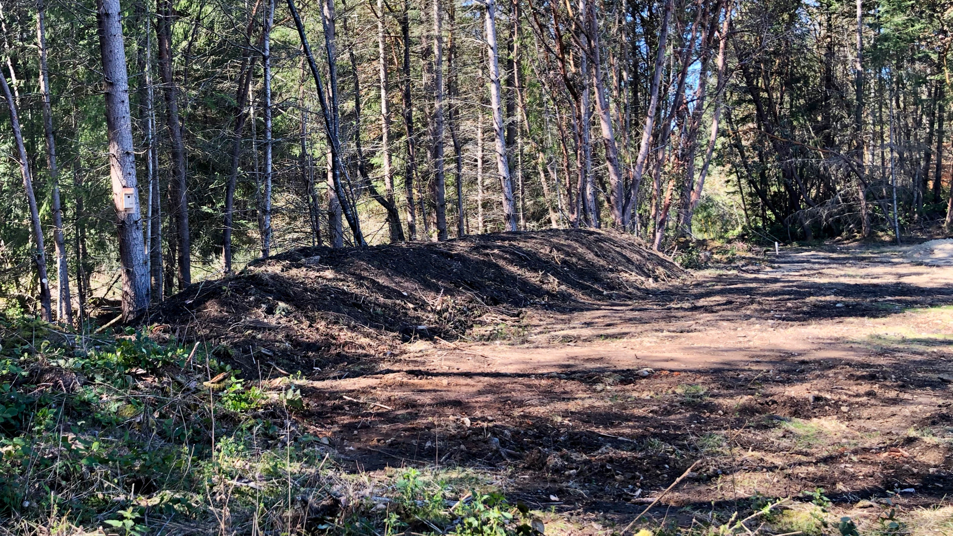 Along the back (front?) of the level top portion, the dirt he scraped all ended up as this great mound, giving some separation from the forest and small ditch/ravine between us and the road.