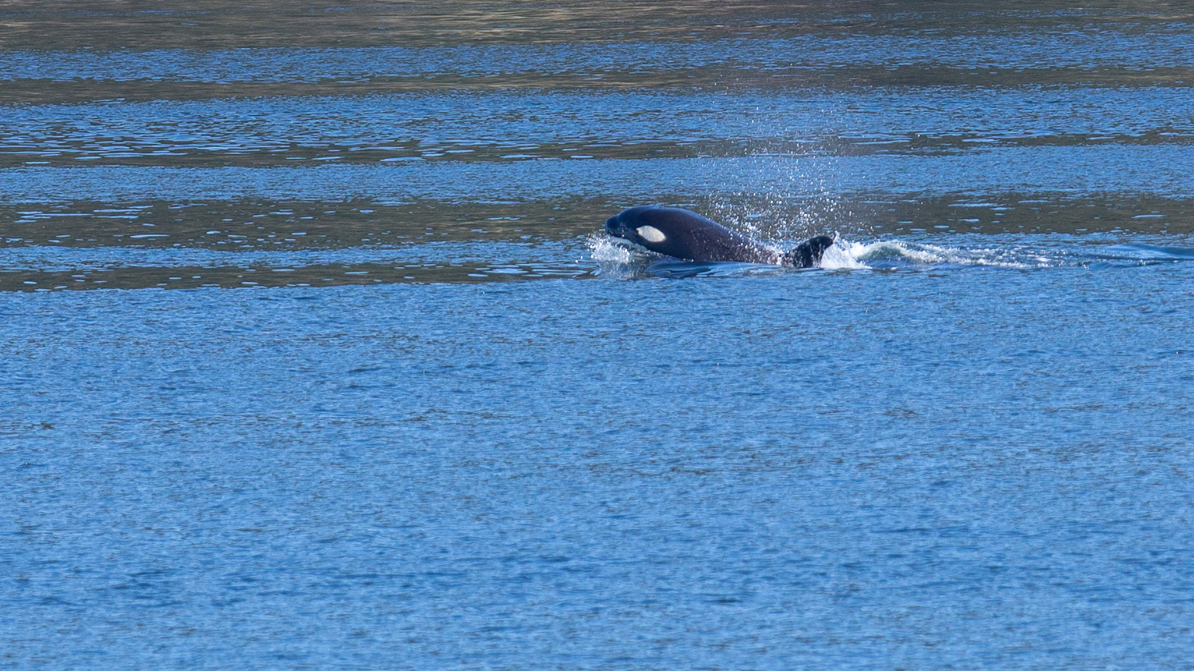 2019 03 Galinao Orcas - 25.jpg