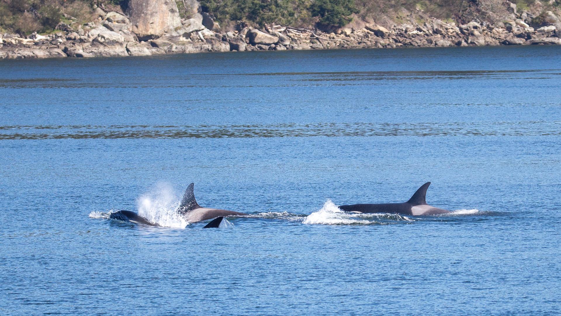 2019 03 Galinao Orcas - 27.jpg
