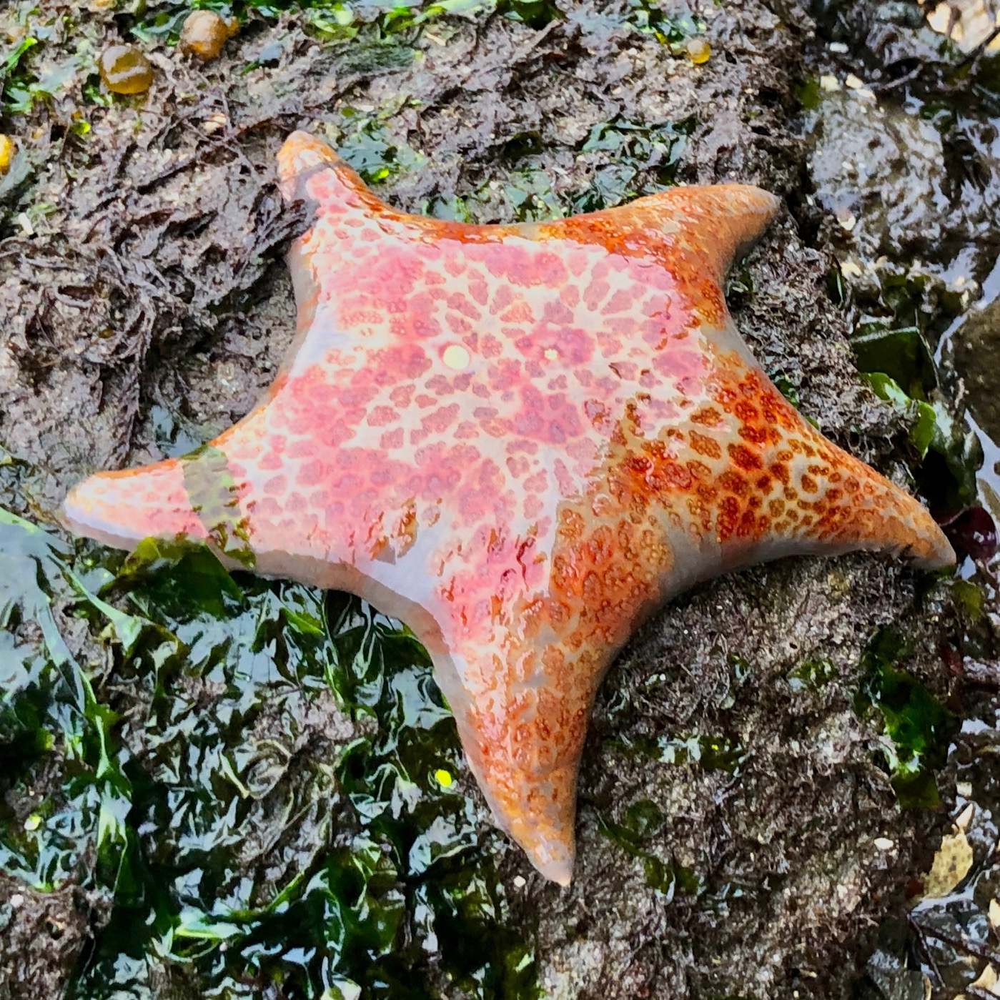 A very cool sea star - we found a few of these
