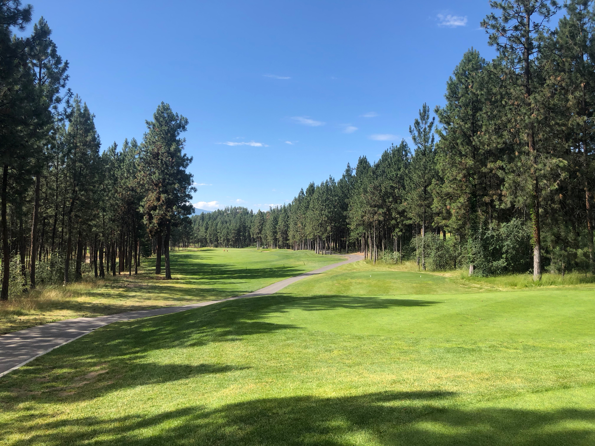 This golf course was much more in the forest, which was a nice change.