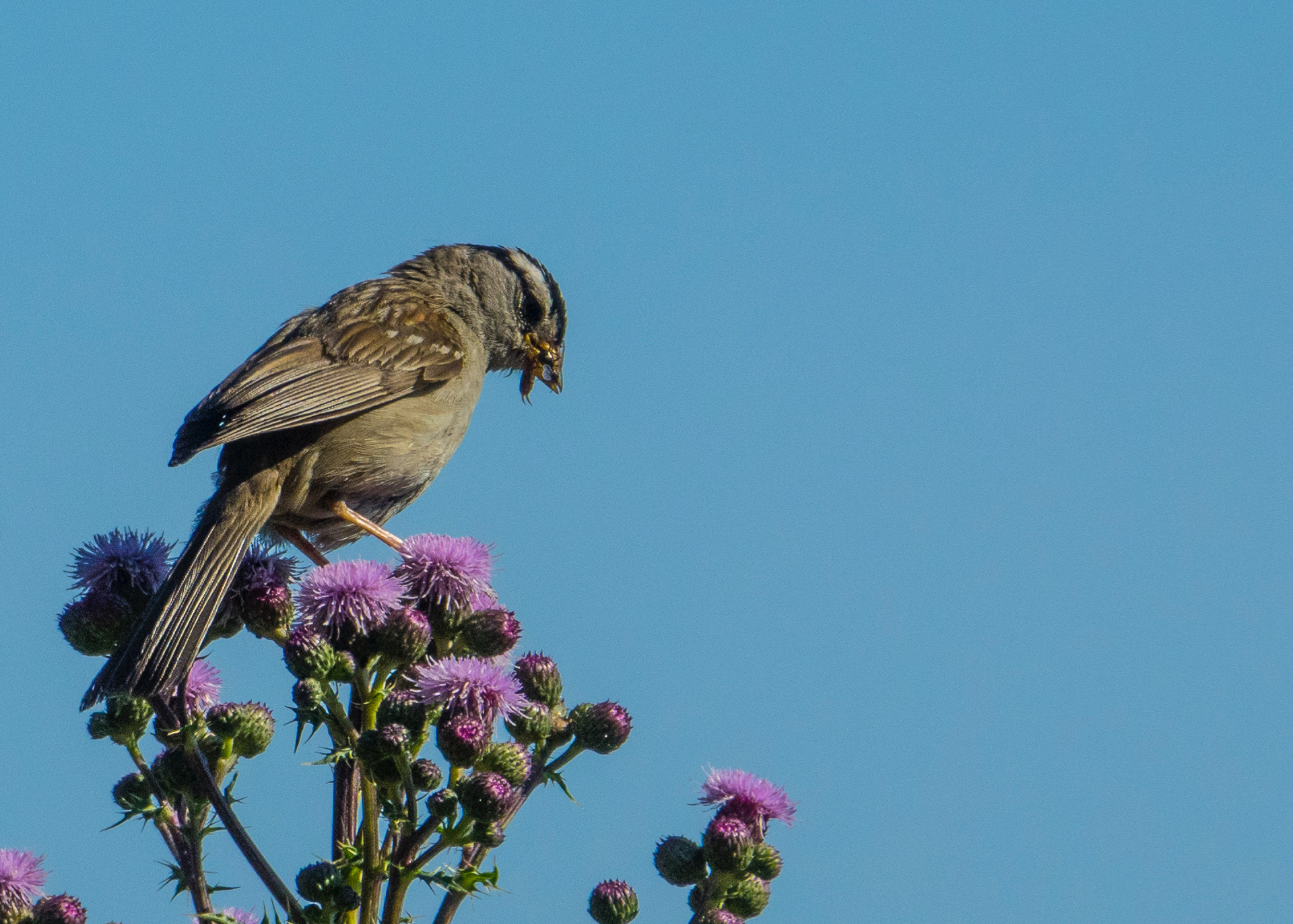 I love the sparrows eating the earwigs - damn things are everywhere!
