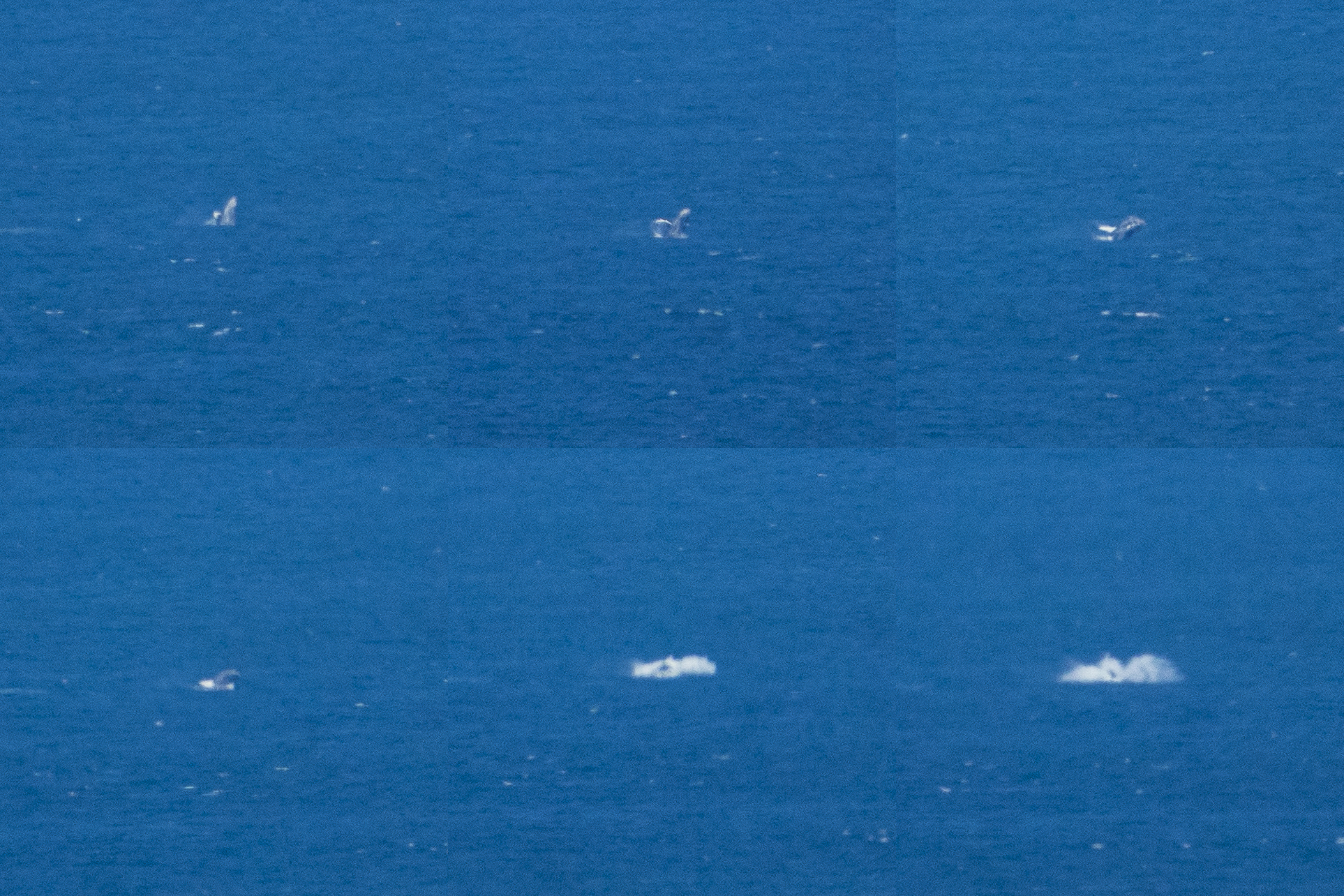 Humpback whale breach sequence. Small and far away, but still pretty cool!
