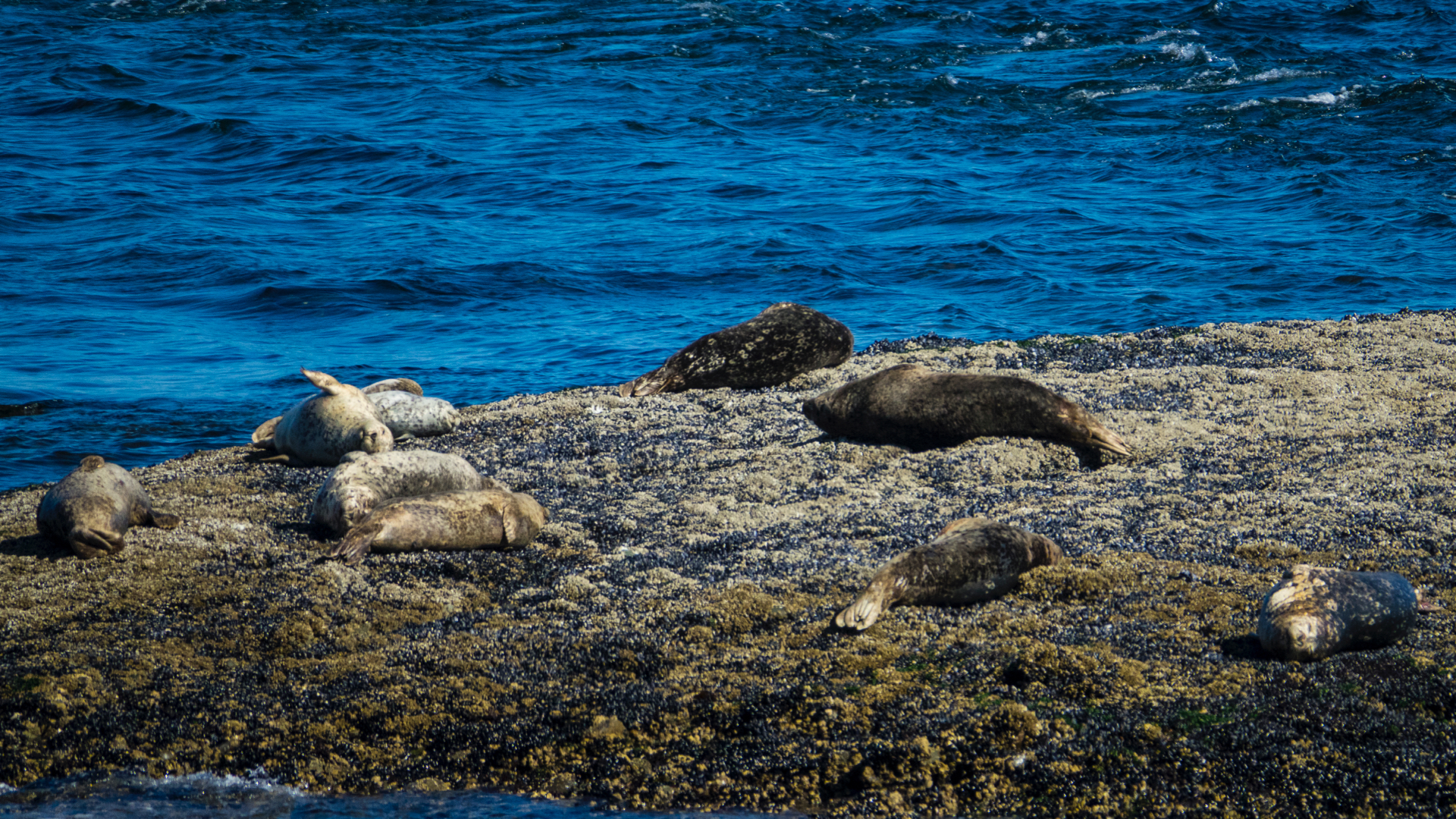 As the cemetery sits up over the water, you get a great view of the seals on the rocks.