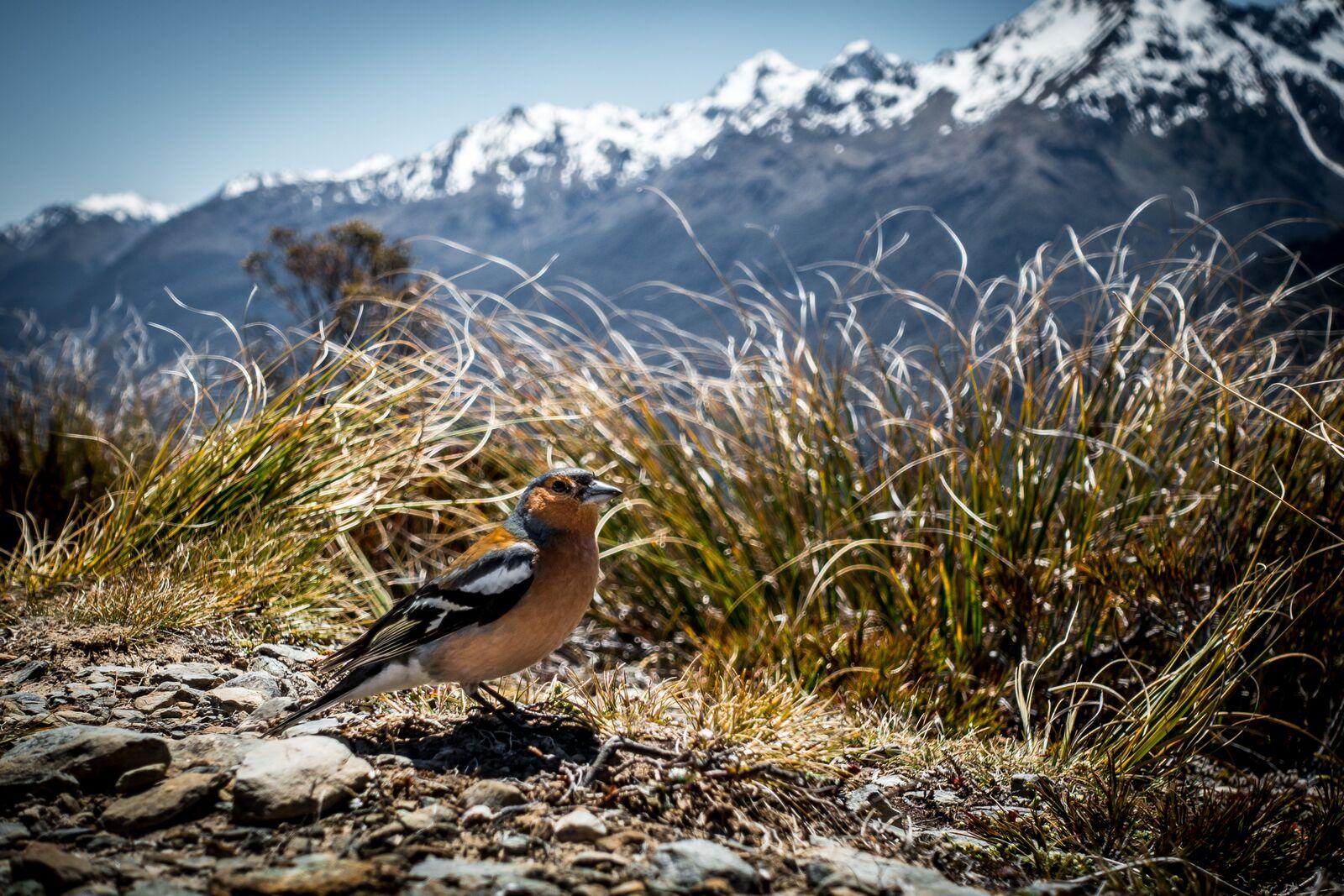 Not a Tūī, but an equally chill birdbro.Photo by  J  osh Wolff .