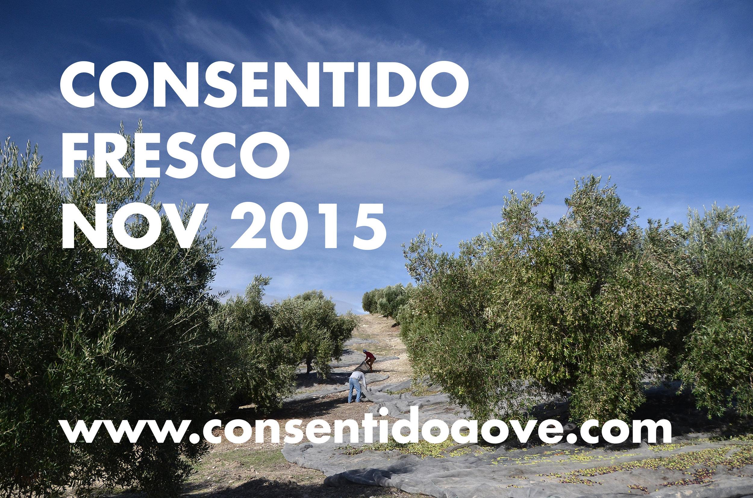 CONSENTIDO DSC_8895.jpg