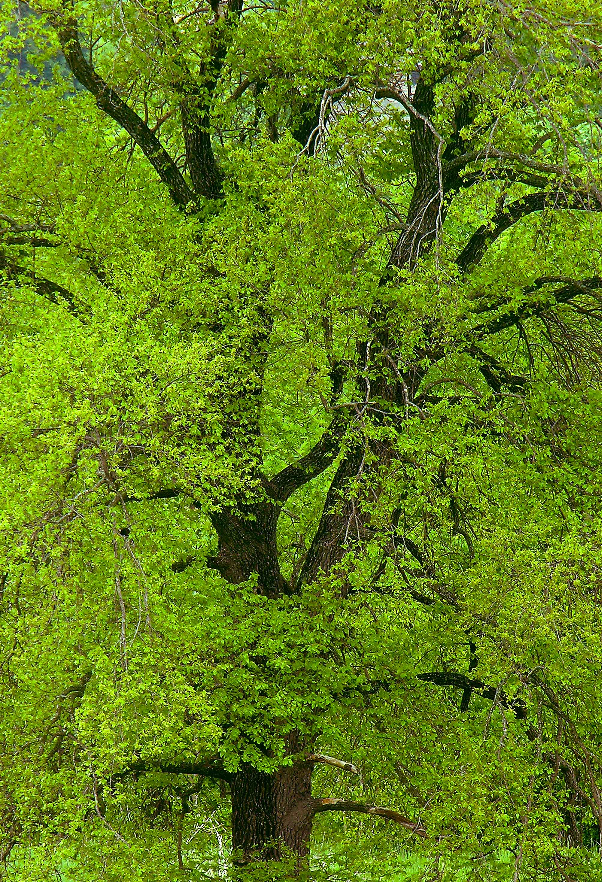 The Greens of Spring