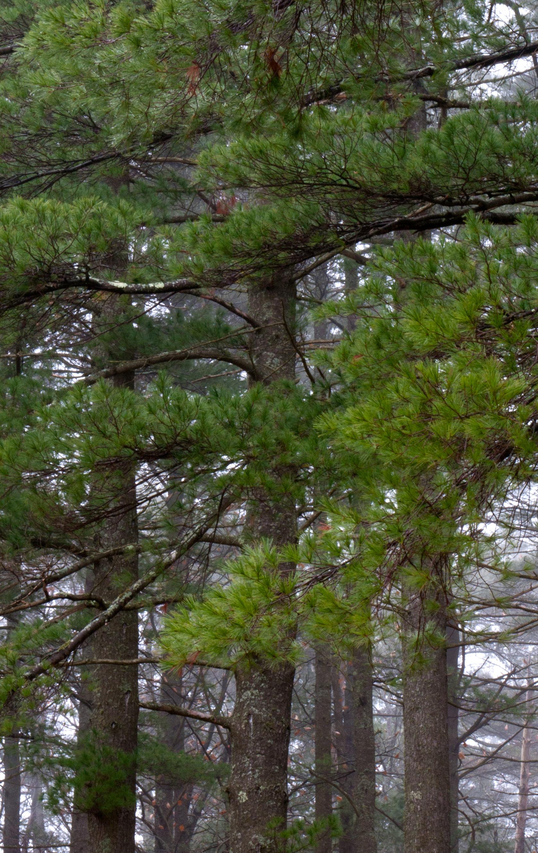 Point Breeze Pines 2