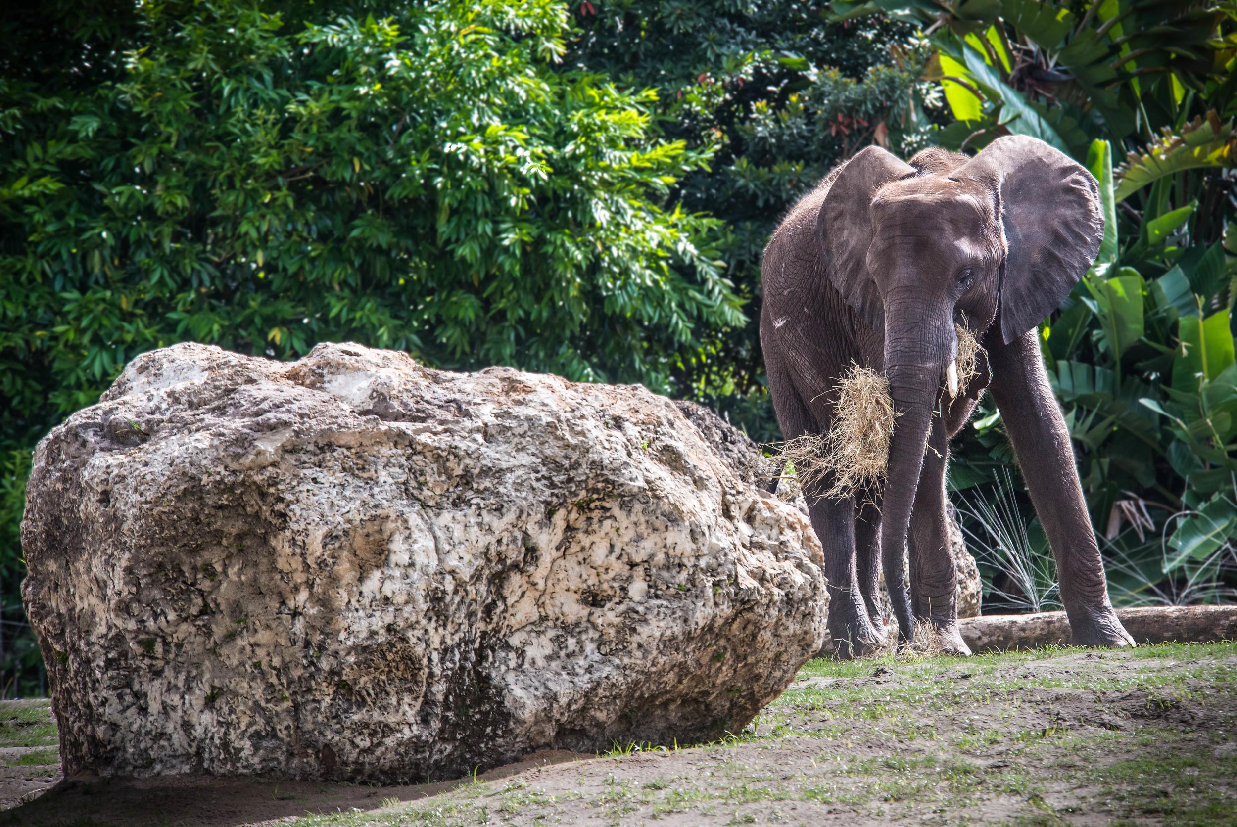 Elephant on Alert