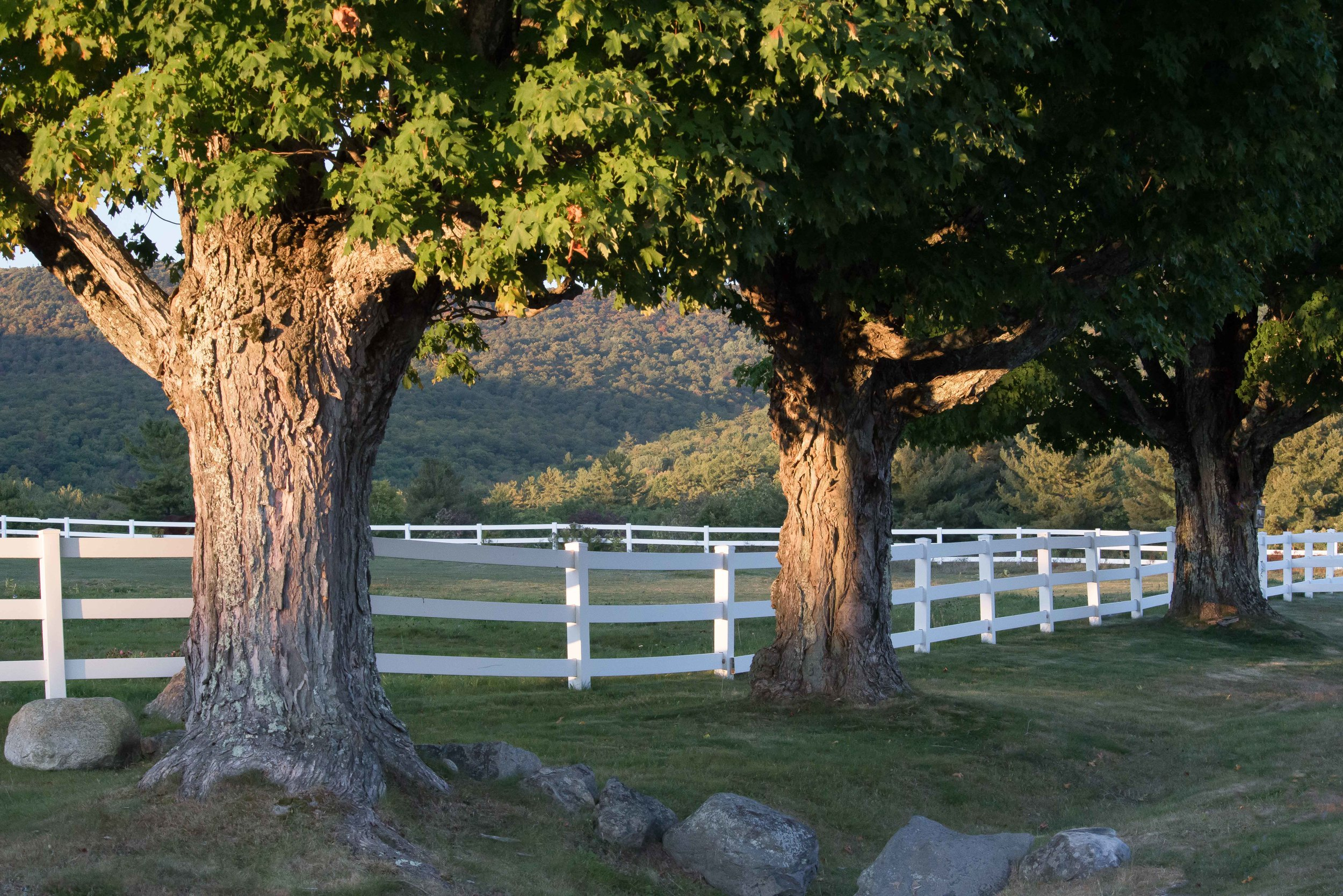 Trees of a Pasture