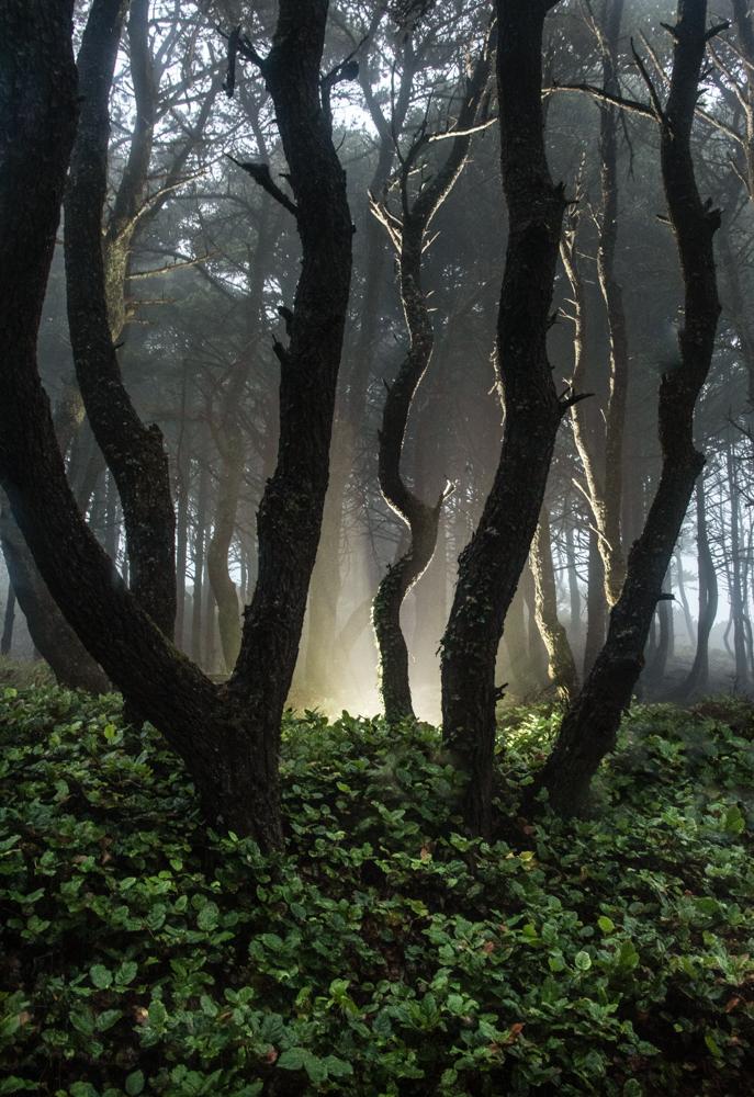 Rainy Forest Illumination