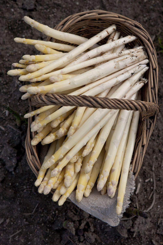 Asparagus Farm-92.jpg