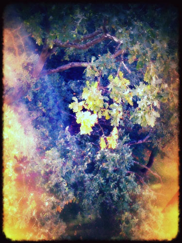 iPhone photography: first touch of autumn