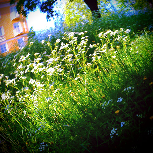 iPhone photography: The hill with wild flowers
