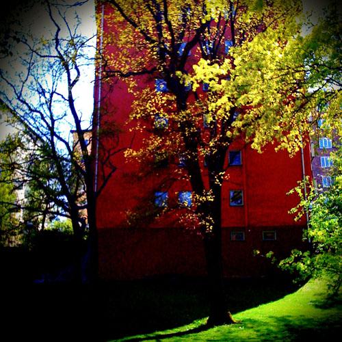 red-building-leaves.jpg