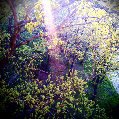 iPhone photography: ray of sun in the park
