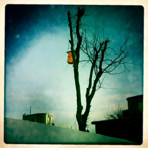 iPhone photography: Birdhouse in March