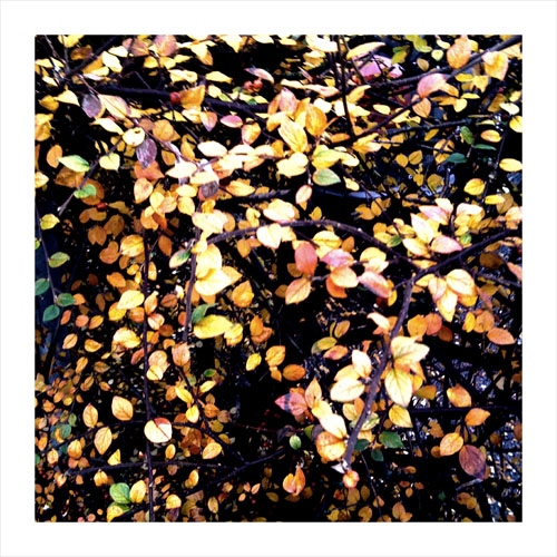 iPhone photography: lunch hour leaves