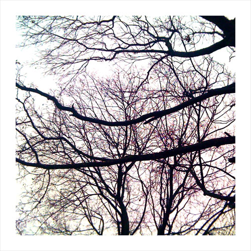 iPhone photography: Trees and sky
