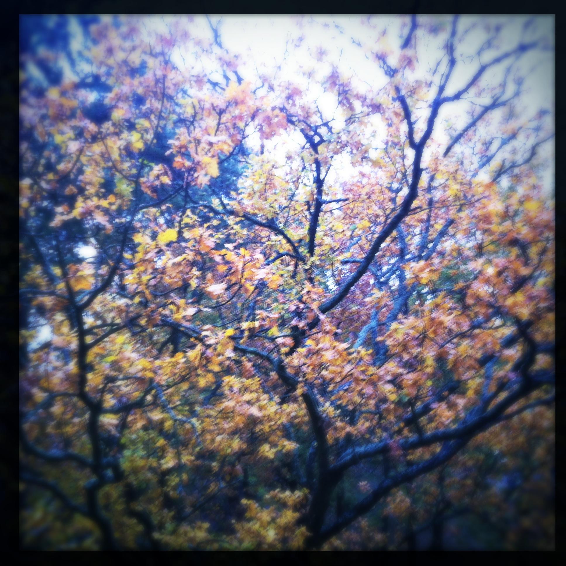 mobile photography: autumn tree