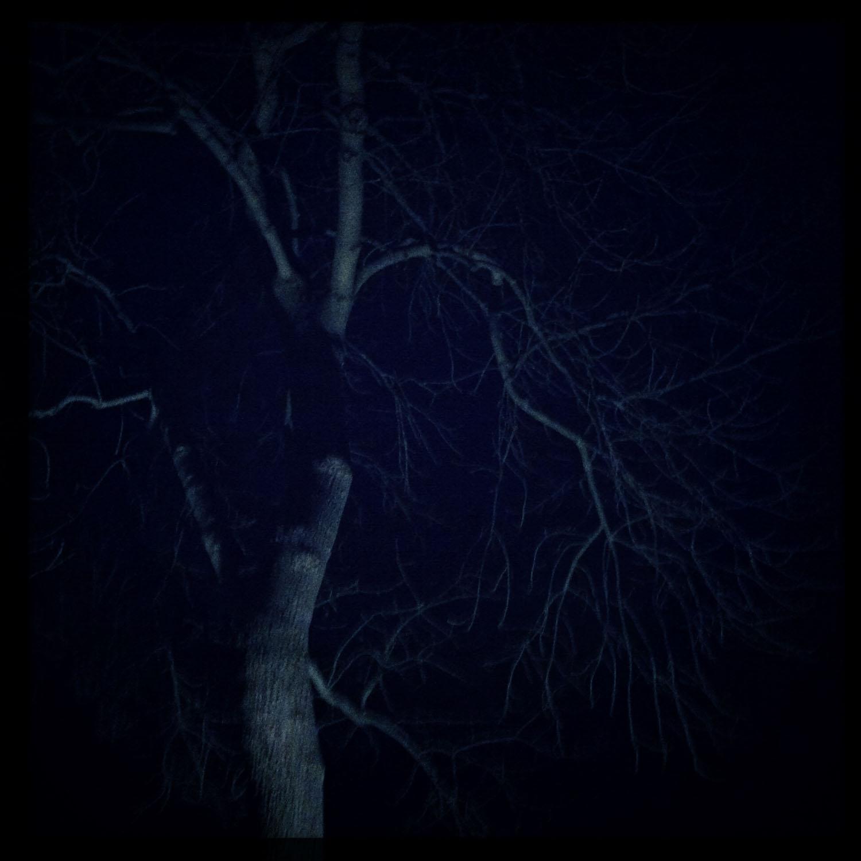iPhone photo: winter's night.