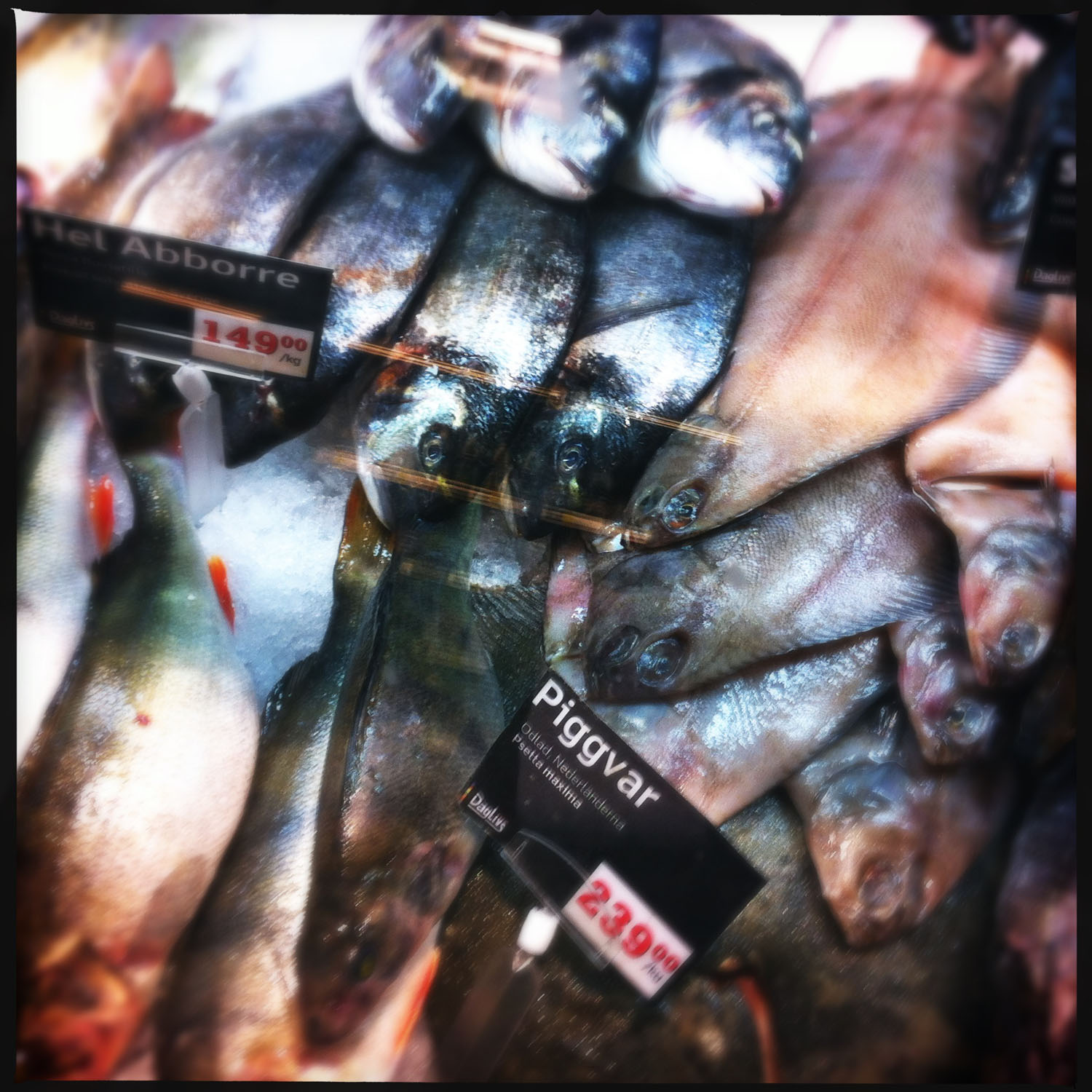 mobile photography: at the fish market