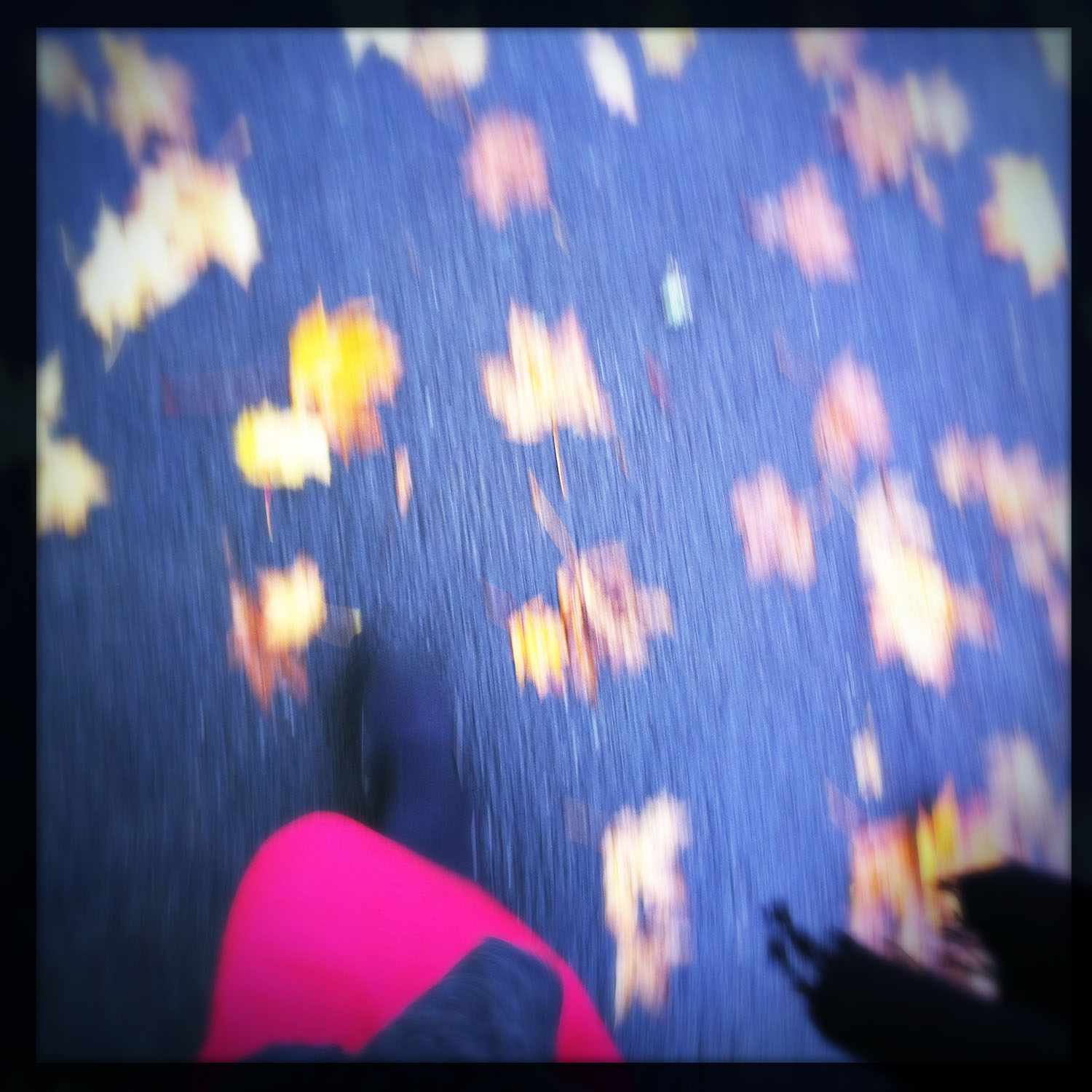 mobile photography: autumn in motion