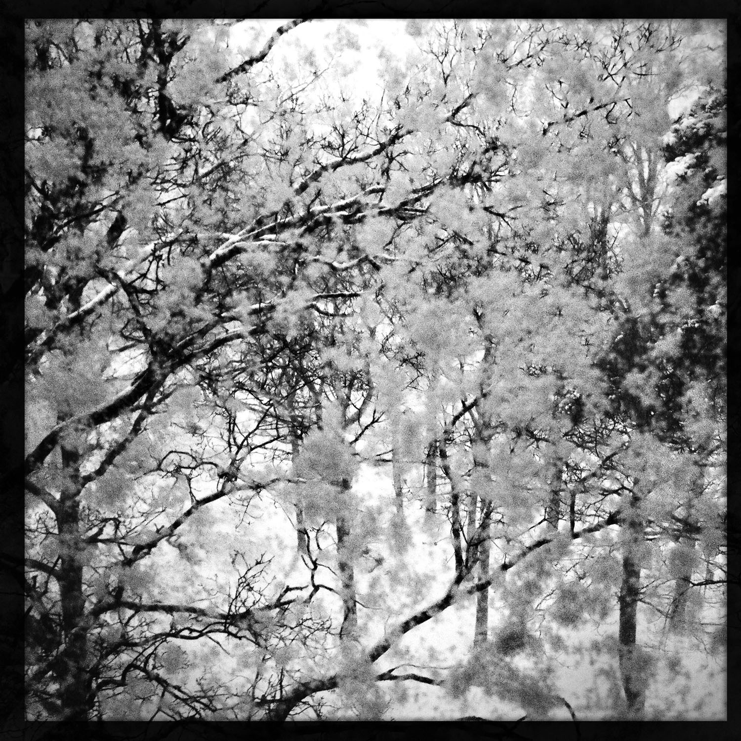 mobile photography: Snowed In