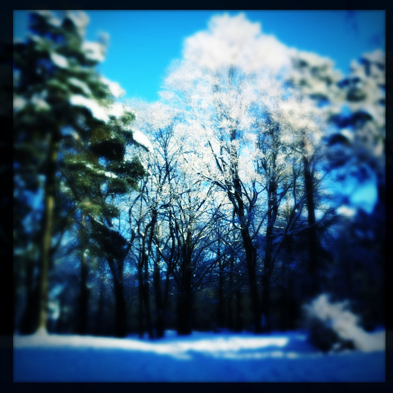 mobile photo: winter landscape