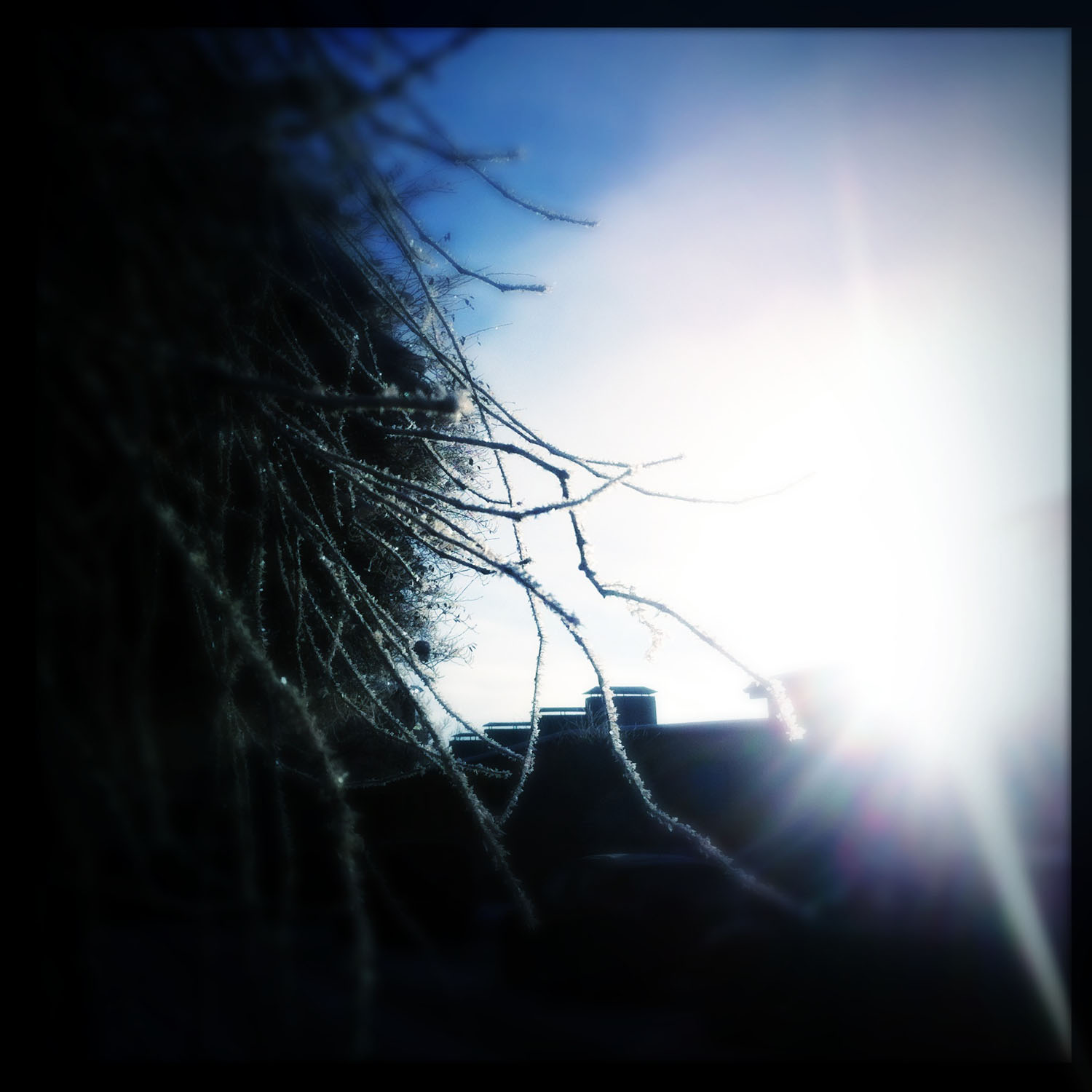 iPhone photo: frosty twigs