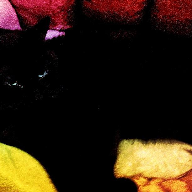 iPhoneography. Black Cat. By Sascha-Irena Wilkesmann.