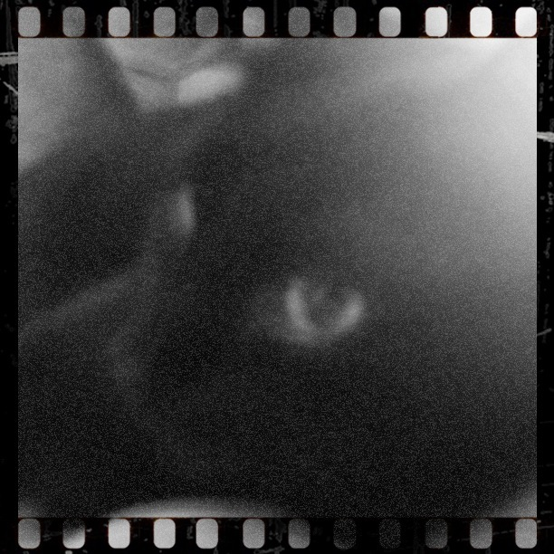 iPhoneography. Cat on film. By Sascha-Irena Wilkesmann.